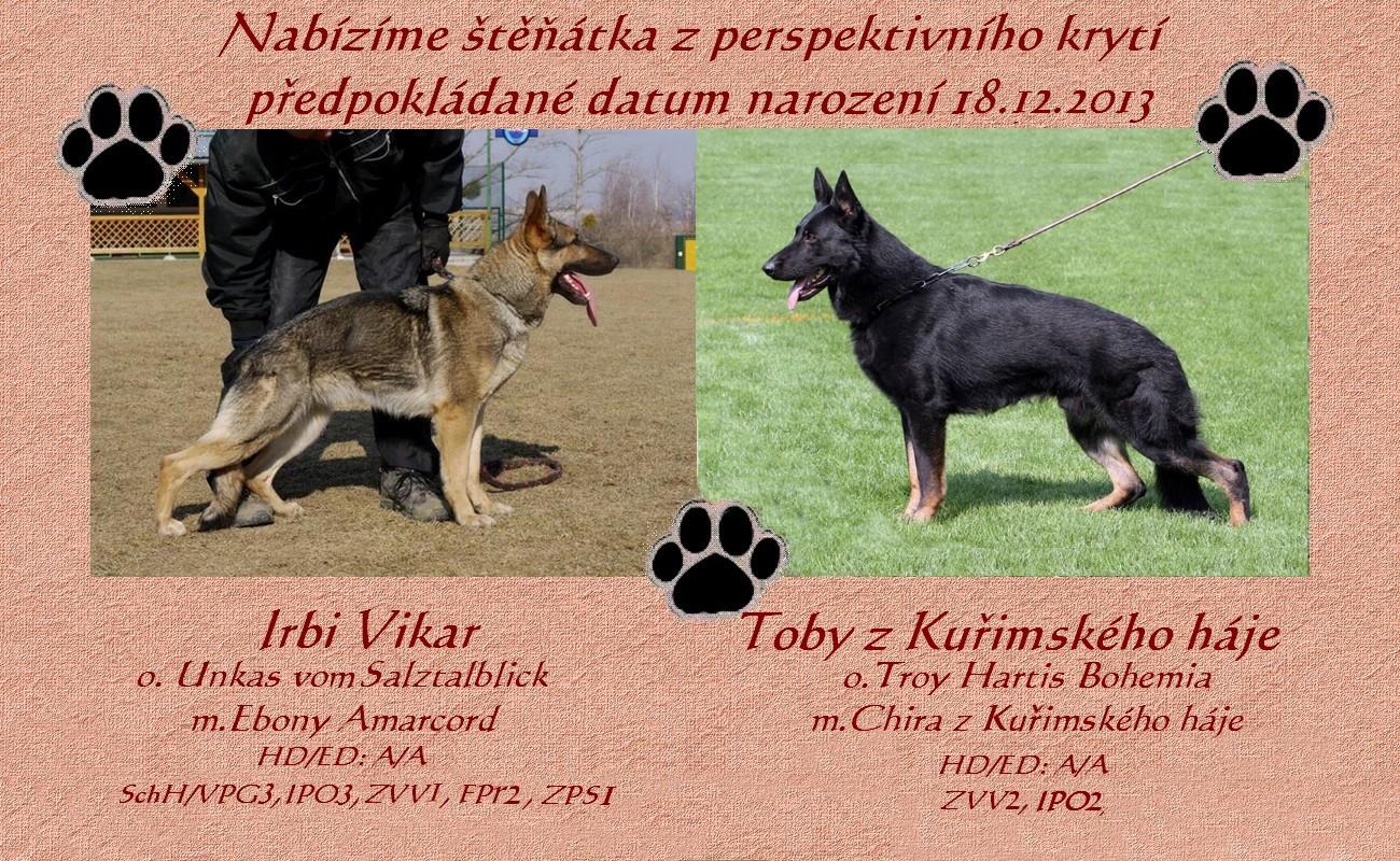 Krytí - Irbi Vikar - Toby z Kuřimského háje